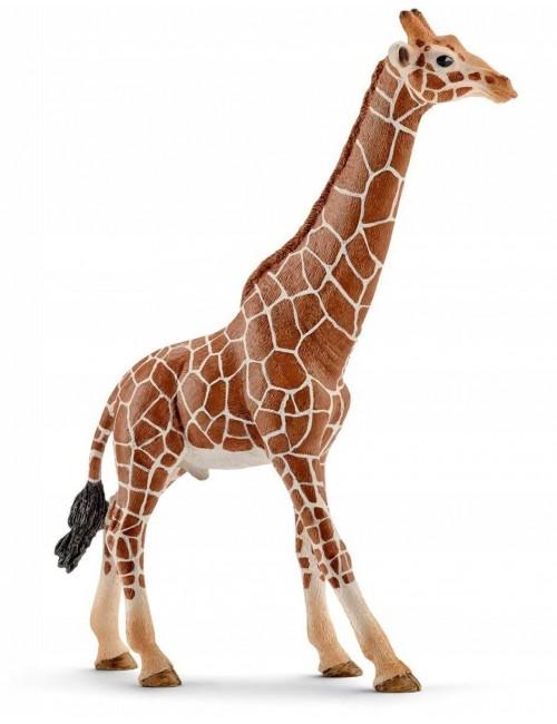 Schleich 14749 samiec Żyrafy