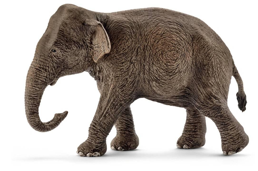 słon schleich