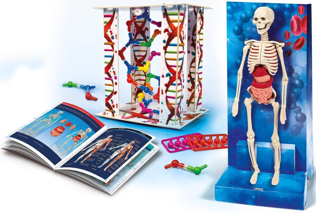 """""""Clementoni Ciało Ludzkie Szkielet DNA Model do Złożenia 60249"""